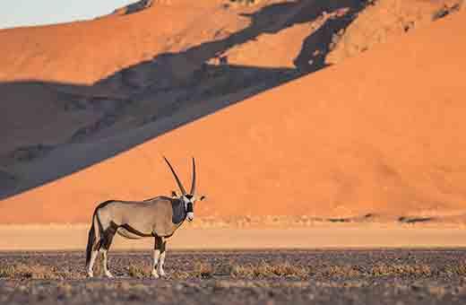 Mit Afrikascout in die Dünen der Namib