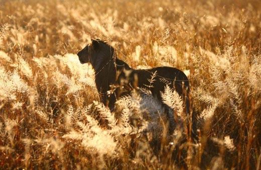 Afrikascout - Die Südafrika Super Safari