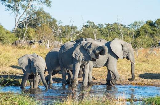 Von SÜDAFRIKA nach SIMBABWE l Campingreise